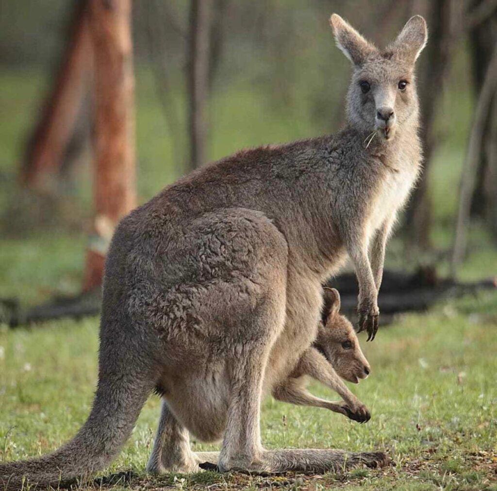 Денежный секрет из Австралии